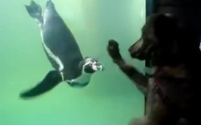 Dog Vs Penguin