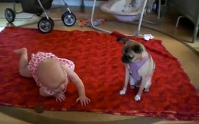 Dog Teaching Baby