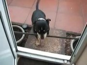 Dog Can't Get In