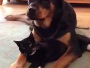 Dog Loves The Cat
