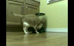 Cat Vs Automatic Feeder