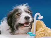 The Showering, Shaking, Doggy Bathing Game