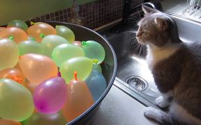 Cat Popping Water Balloons