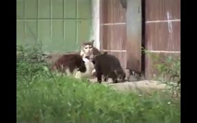 Cute Animals Compilation 2