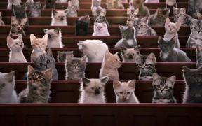 Kitten Kollege - Understanding Kitten Sounds