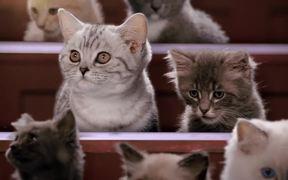Kitten Kollege - A Guide to Neutering Kittens