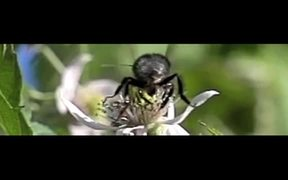 Bumblebee sound of music