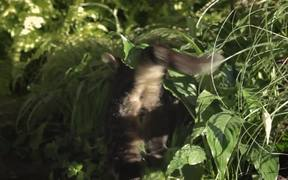 WWF Canada Commercial: Norman the Eco-Warrior