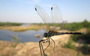 A Cute Dragon Fly