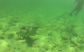 Baird Bay / Australia