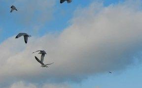 Pigeons and Seagulls