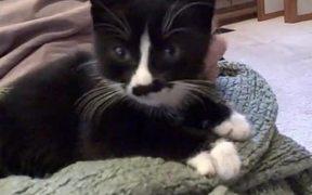 Scamperpants the Kitten