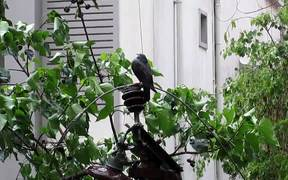 Pigeon on an electric pole during the rain