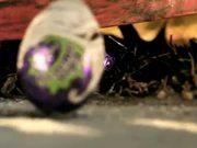 Cadbury Ad: Last Stand and Cornered