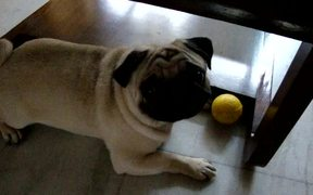 Toyo Being Possessive About His Sponge Ball