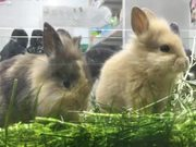 Rabbit Speed Chewing