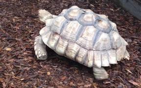 Turtle Enclosure