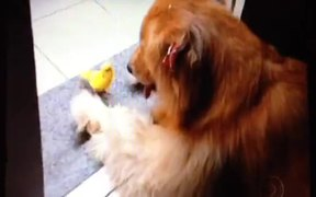 Friendship Of Parrot And Dog