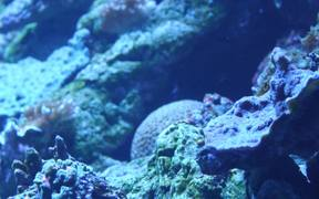 Coral and Fishes Under the Sea
