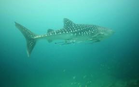 Informational Video on Sharks