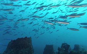 Martinique Diving