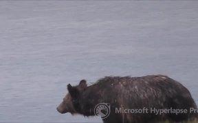 Study Bear Motion