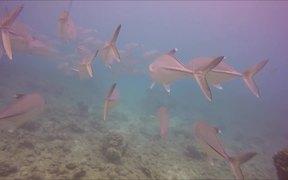 Snorkeling Hanauma Bay Hawaii