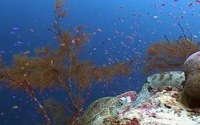 Sipadan Underwater World
