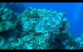 Turtle in Cozumel