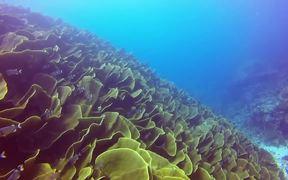 Underwater Marvels of Palau