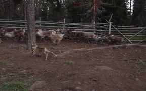 Tundra Cowboy Trailer