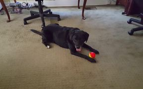 Dakota with the Babble Ball