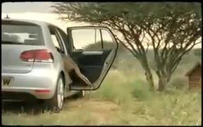 VW Golf 6 Commercial: Cheetah