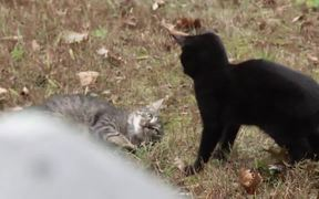 Cats In Training!