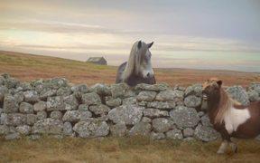 Three Video: The Pony