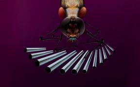 Tom Kuntz Video: Bugs