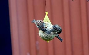 Birds Feeding Close Up
