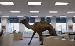 Geico Commercial: Hump Day