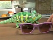 Ray-Ban: Never Hide Virals