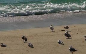 Birds at the Beach Side