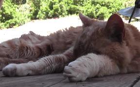 Red Cat Close Up Older Rescued
