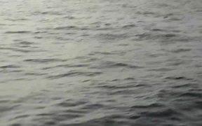 Stingrays Flying Fish CaboSanLucas 2014