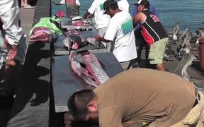 Swordfish Cutting Up Cabo San Lucas