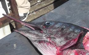 Swordfish Cutting Up Close Up Cabo San Lucas