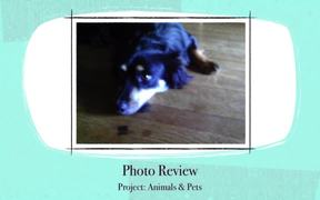 Project 3 Animals and Pets