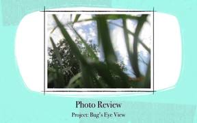 Project 6 Bug's Eye View