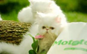 Mototol Commercial: Kittens