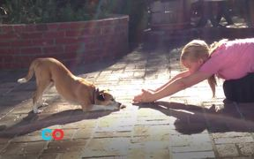 PetCo Commercial: The Power of Together