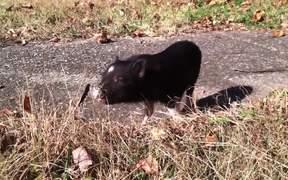 Funny Mini Piggy Tales 2