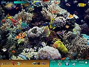 Hidden World: Underwater
